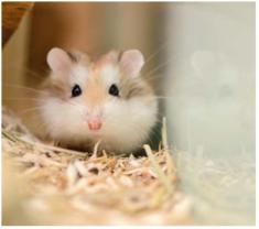 Hamsterkauf 1.PNG